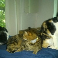 Pixi and Miel and Teka the cats